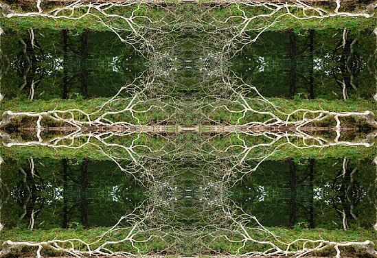 Pattern play with image of dead tree