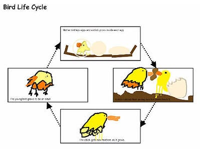 wx-draw-life-cycle
