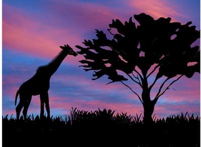 silhouette_savannah